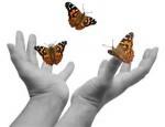 making it up - butterflies