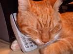 cat on phone